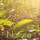 Relaxing Forest Godrays - VideoHive Item for Sale