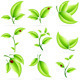 Fresh Green Leaves Set - GraphicRiver Item for Sale