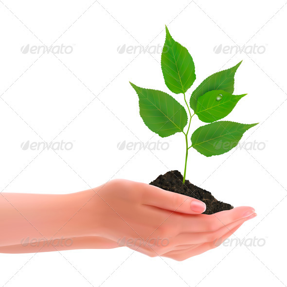 Hands holding young plant Vector