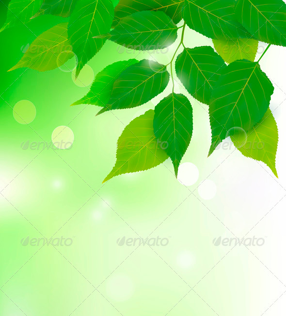 Nature background with fresh green leaves Vector