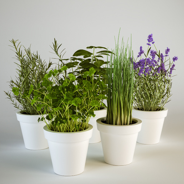 Herbs in Pots Set - 3DOcean Item for Sale