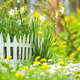 Flower Bed with Narcissuses and Decorative White Fence - PhotoDune Item for Sale