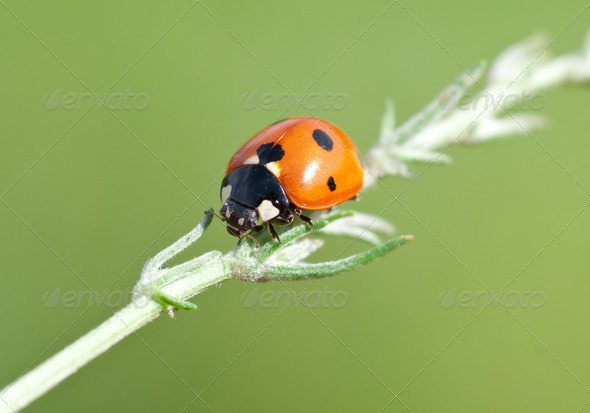 Ladybird on leaf - Stock Photo - Images