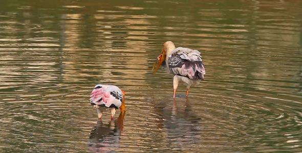 Fishing Stork 3