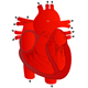 Human Heart - GraphicRiver Item for Sale