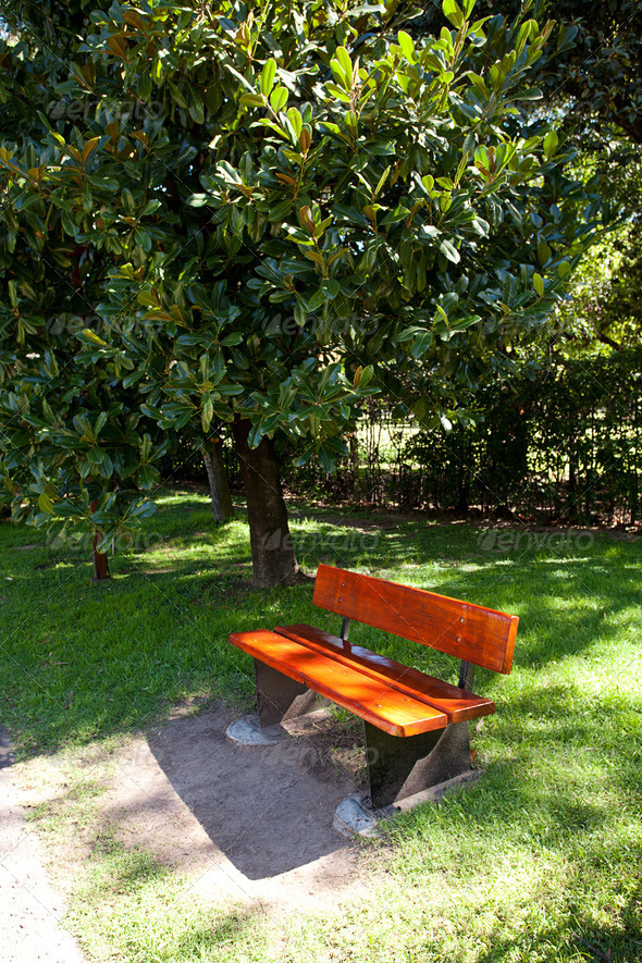 lonely bench in the park under the ficus - Stock Photo - Images