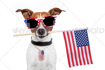 american dog - PhotoDune Item for Sale