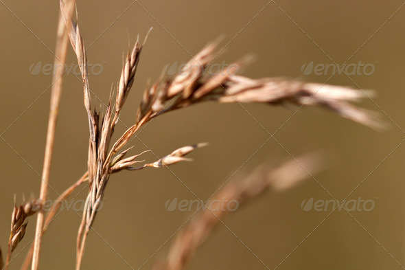 dry grass - Stock Photo - Images