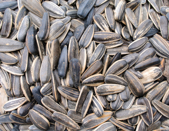 sunflower seeds background - Stock Photo - Images