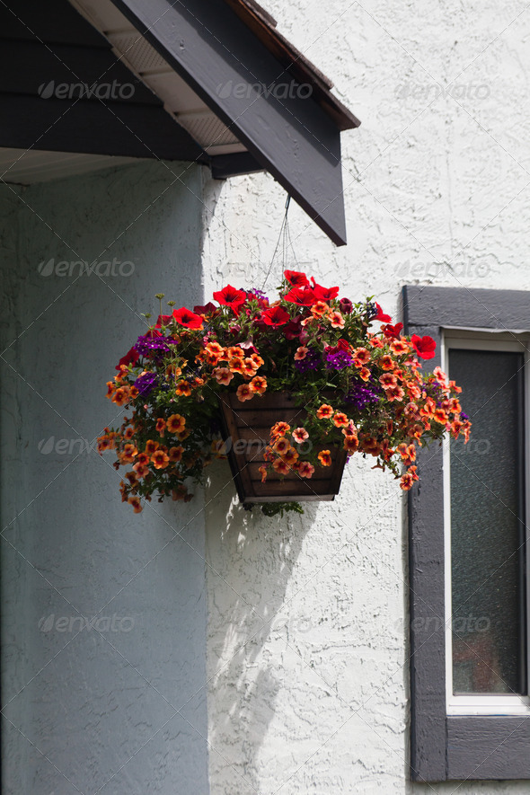 Hanging Flower Basket - Stock Photo - Images