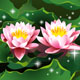 Lotus flowers in a pond - GraphicRiver Item for Sale