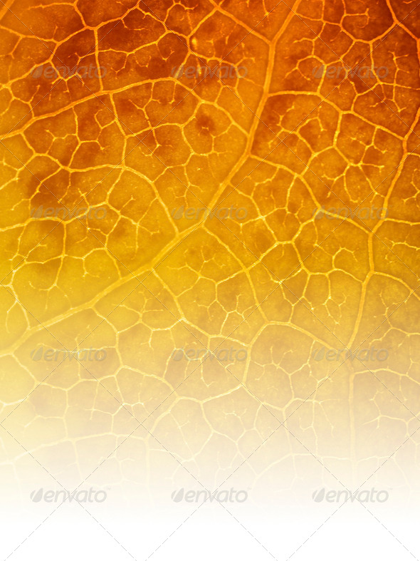 Orange nature background - Stock Photo - Images