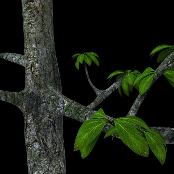 3DOcean Tree with nice leaf 93404