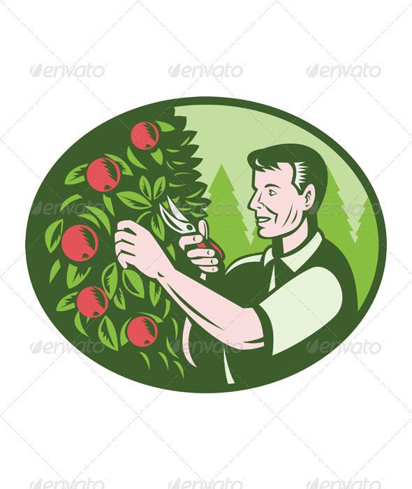 Horticulturist Farmer Pruning Fruit