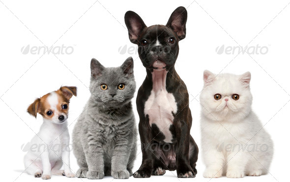 Group of dogs and cats in front of white background - Stock Photo - Images