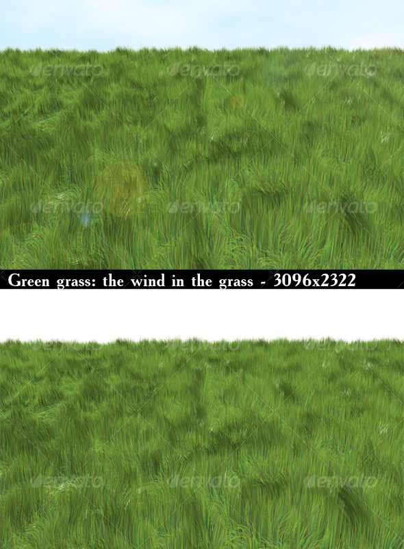 Green grass the wind in the grass