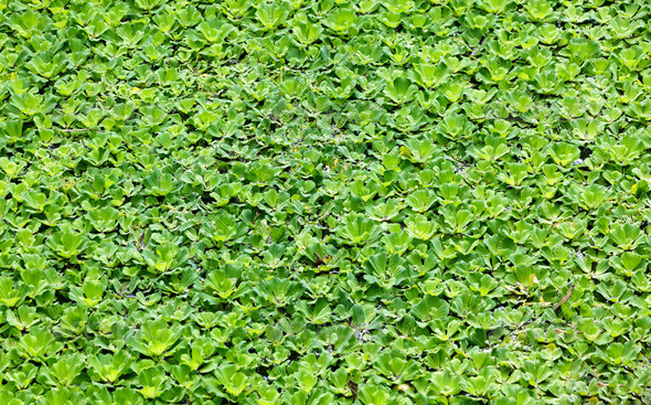 floating plant background - Stock Photo - Images