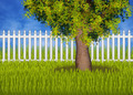 Green summergarden with fence and tree - PhotoDune Item for Sale