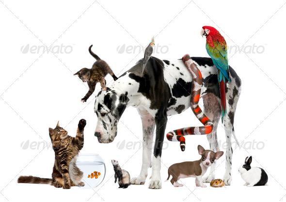 PhotoDune Group of pets together in front of white background 289422