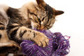 cat and a ball of thread - PhotoDune Item for Sale