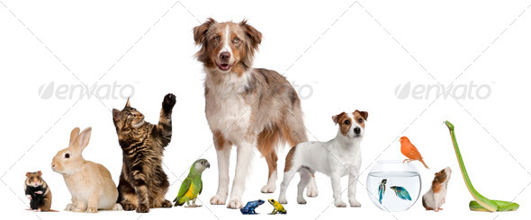 PhotoDune Group of pets together in front of white background 289449