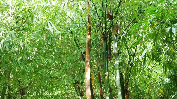 VideoHive Bamboo in the Forest 18701493