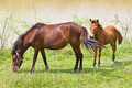 Two horse - PhotoDune Item for Sale