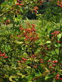 Summer Berries - PhotoDune Item for Sale