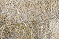 Bales of straw. - PhotoDune Item for Sale