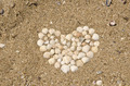 Heart of Clams on the Beach - PhotoDune Item for Sale
