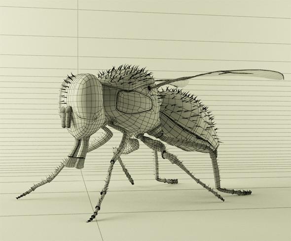 3DOcean 3D Fly 2611504