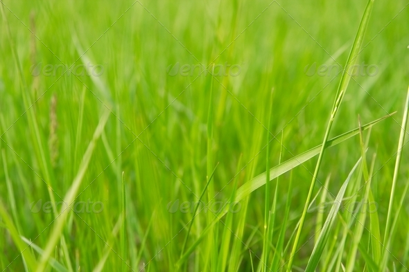 Grass - Stock Photo - Images
