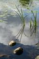lake stones - PhotoDune Item for Sale