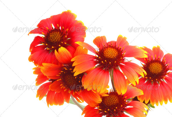 Scarlet flowers - Stock Photo - Images