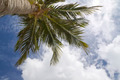 Tall Palm - PhotoDune Item for Sale
