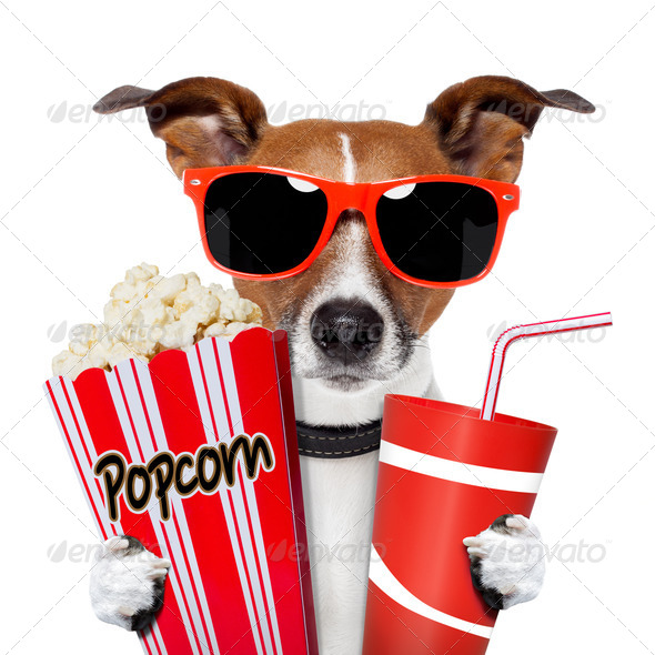 dog watching a movie - Stock Photo - Images