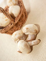 Mushroom champignon - PhotoDune Item for Sale