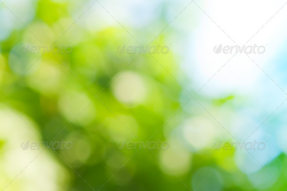 spring blurred background in green colors - Stock Photo - Images