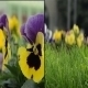 Flowers 1 (2-Pack) - VideoHive Item for Sale