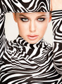 zebra fashion - PhotoDune Item for Sale