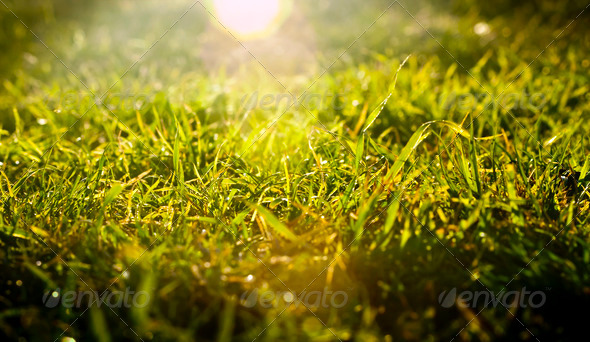 Grass Sunrise - Stock Photo - Images