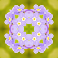 Purple Flowers Kaleidoscope - PhotoDune Item for Sale