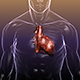 Heart in a Human Body - GraphicRiver Item for Sale