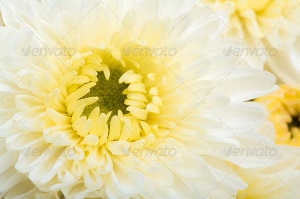 Beautiful white Flower - Stock Photo - Images