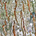 tree bark texture - PhotoDune Item for Sale