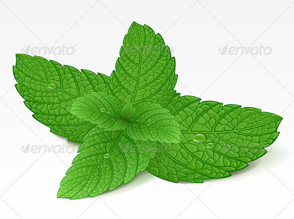 Mint Leaf Graphicriver