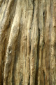 Dead tree trunk background - PhotoDune Item for Sale