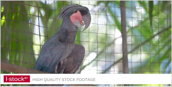 Parrot In Zoo 4