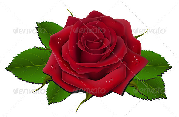 GraphicRiver Red rose 2683285