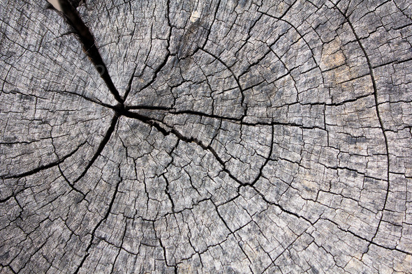 The details of the old wooden circle - Stock Photo - Images